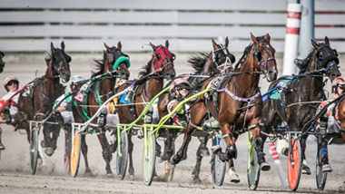 group of harness racers on the track
