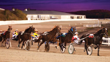 group of harness racers